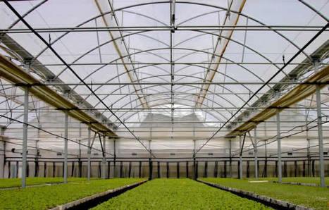 Climatización pasiva: El efecto Invernadero | Nergiza | GEOGRAFIA SOCIAL | Scoop.it