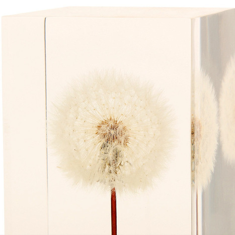 OLED Dandelion Lights by Takao Inoue | Culture and Fun - Art | Scoop.it