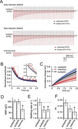 """""""Self"""" versus """"Non-Self"""" Connectivity Dictates Properties of Synaptic Transmission and Plasticity   Social Foraging   Scoop.it"""