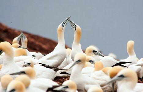 Près de 70% des populations d'oiseaux marins auraient disparu   Mes passions natures   Scoop.it