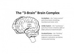 Want to Get Through to Teens | Talk to Their Brains - BreakingTheCycles.com | Early Brain Development | Scoop.it