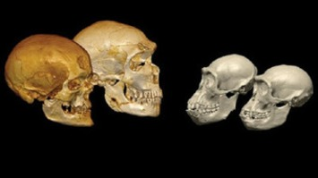 DNA from Neanderthal relative may shake up human family tree | Archaeology News Network | Kiosque du monde : A la une | Scoop.it
