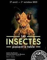 Les insectes passent à table, au musée national d'histoire naturelle, jusqu'au 1er octobre (Paris 5e) - Ministère de l'agriculture, de l'agroalimentaire et de la forêt | Agriculture urbaine, architecture et urbanisme durable | Scoop.it