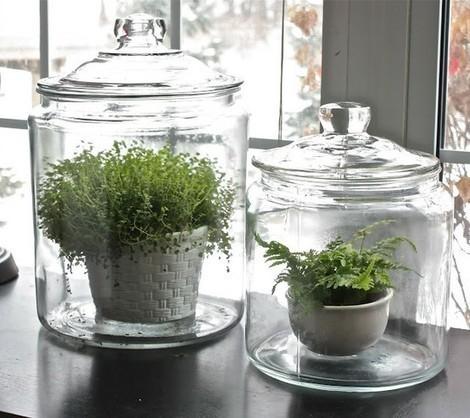 Astuces déco hiver au top : Rentrez les plantes à l'intérieur