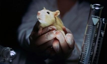 Hayvan deneylerine son verecek buluş   read it.oku   Scoop.it