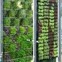 Save Space and Water with Vertical Gardening | Wellington Aquaponics | Scoop.it