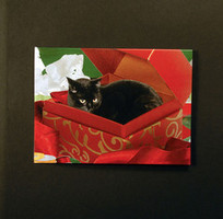 Black Cat In A Box Christmas Cards (Set of 5) | Christmas Cat Ornaments and Cards | Scoop.it