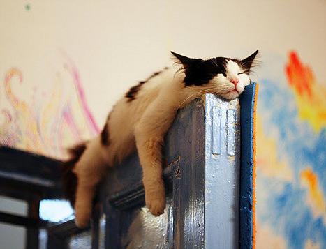 Dormir permet au cerveau de se nettoyer | Merveilles - Marvels | Scoop.it