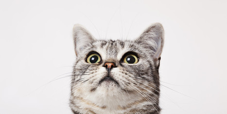 Cats Probably Think We're One Of Them | Benessere animale | Scoop.it
