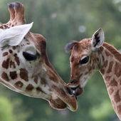 La tache de Darwin, plongée dans la diversité des formes animales | Best practice for teachers | Scoop.it