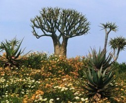 Why Are There So Many Kinds of Plants? | Biology Online Blog | Erba Volant - Applied Plant Science | Scoop.it