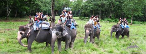 Jungle Safari in Nepal - Bhandari Tours & Travels | Trekking & tour in Nepal | Scoop.it