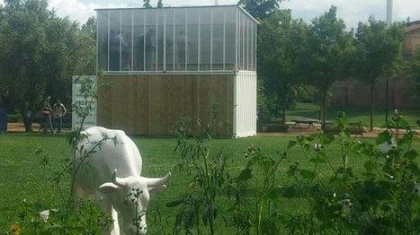 Toulouse : une ferme urbaine utilise des poissons pour faire pousser des légumes | Territoires durables | Scoop.it