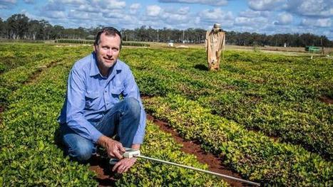Mapping cracks peanut farming puzzle - The Australian | Precision Viticulture | Scoop.it