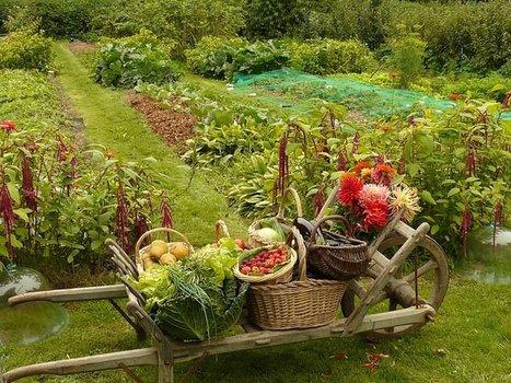 Une étude montre que les fruits et légumes vendus en circuit court de type amap sont les moins chers du marché | Nouveaux paradigmes | Scoop.it