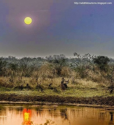 Tadoba national park and Tiger reserve in Maharashtra ~ Wildlife travel and tourisms   computer hardware and networking course   Scoop.it