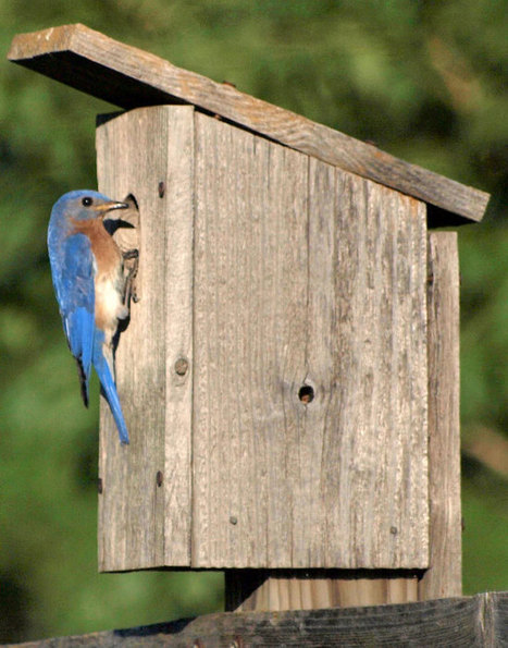 The When, Where, & What of Birdhouses « TUFF GUARD The Perfect Garden Hose | The Perfect Garden Hose | Scoop.it