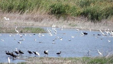 La Ornitología en las Tablas de Daimiel, un auténtico paraíso | Casa NIDO - HOUSE NEST | Scoop.it
