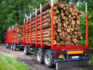 Production d'électricité par le bois : un vrai potentiel | Le groupe EDF | Scoop.it