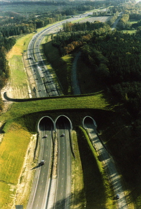 THE WORLD GEOGRAPHY: Unusual Bridges For Animals - Wildlife Overpasses | Geography education in Australia | Scoop.it