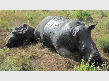 Rhino family found butchered and dehorned | What's Happening to Africa's Rhino? | Scoop.it