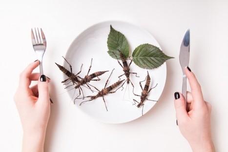 Alimentation du futur : l'avenir de notre assiette | Food sucré, salé | Scoop.it