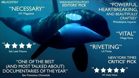 Cetacean campaigners of the World. | #Orca #Avenger @VidarOceans | Scoop.it
