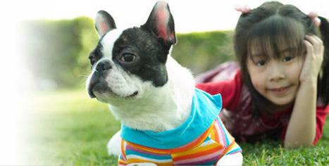 Abbott Animal Health: Pet care, Veterinary Medicine, Pet Products | cats & dogs! | Scoop.it