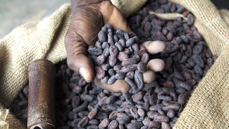 Can collective action in the cocoa industry overcome the challenges of competition? | Devex | Geogeeks | Scoop.it