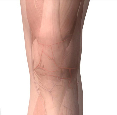 Knee Anatomy, Diagram & Pictures | Body Maps | Medic-e-learning case 1 (Knee) | Scoop.it