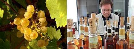 Italy's Weird and Wonderful Wine Grapes | Wine News & Features | Italian Wines | Scoop.it