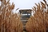 FAO -Nouvelles:Perspectives agricoles de l'OCDE et de la FAO 2013-2022 | Veille Scientifique Agroalimentaire - Agronomie | Scoop.it