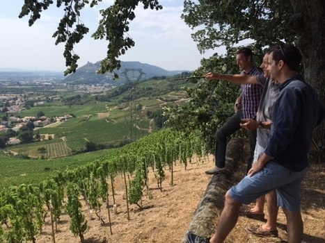 Protecting Cornas   Vitabella Wine Daily Gossip   Scoop.it