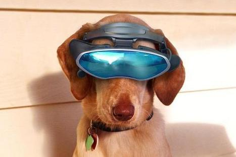 10 high-tech gadgets to pamper your Pet | Technology in Business Today | Scoop.it