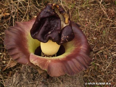 Top Incredible Flowering Plants in the World   svetobor   Scoop.it