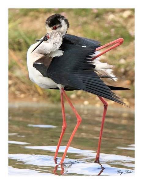 Réserve ornithologique du Teich : la vie en pleine éclosion - Le blog de nature-ailes.over-blog.com | Le Bassin d'Arcachon | Scoop.it