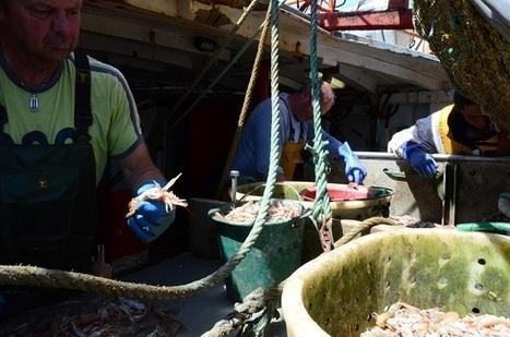Finistère. En mer, avec les marins pêcheurs du Guilvinec (vidéo) | Tourisme en Bretagne Sud | Scoop.it