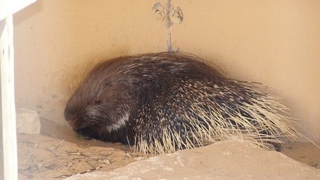 Porcupine turns up 1,400-year-old lamp | Jewish Education Around the World | Scoop.it