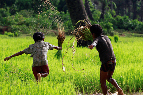 Cambodia tests 'super rice' to fortify its children | Nutrition and Development | Scoop.it