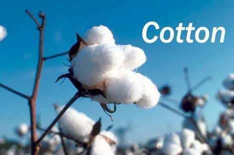 Why does Cotton Kill? | Section Hikers Backpacking Blog | Hiking Hacks | Scoop.it