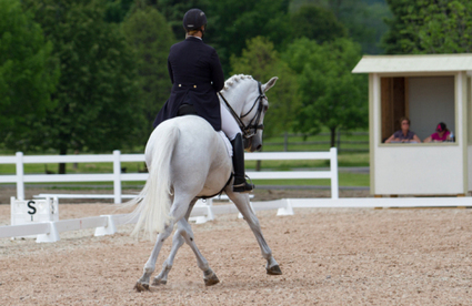 Working Towards Your USDF Bronze, Silver or Gold Medal? What You Need to Know, presented by Total Saddle Fit | Dressage Dreams | Scoop.it