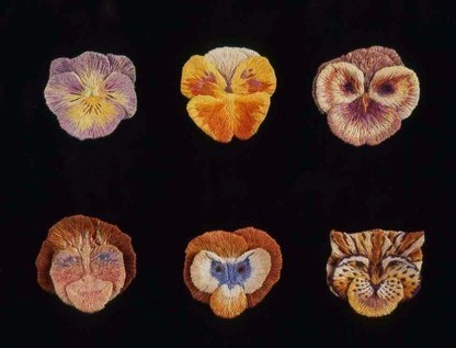 Pansy Faces | Plant Cell Biology | Scoop.it