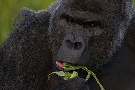 ENDANGERED SPECIES LIST 2014 - All About Wildlife | Poaching | Scoop.it
