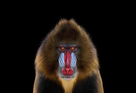 Amazing Animal portraits ! from Brad Wilson | EVS | Scoop.it