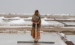 #Farming on the edge: the #India #salt producers coping with 48C heat | Messenger for mother Earth | Scoop.it