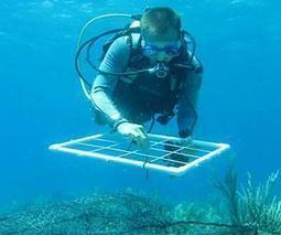 Large study shows pollution impact on coral reefs -- and offers solution | Sustain Our Earth | Scoop.it