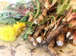Here's Why the Root of This Herb More Effective Than Chemotherapy | The Basic Life | Scoop.it