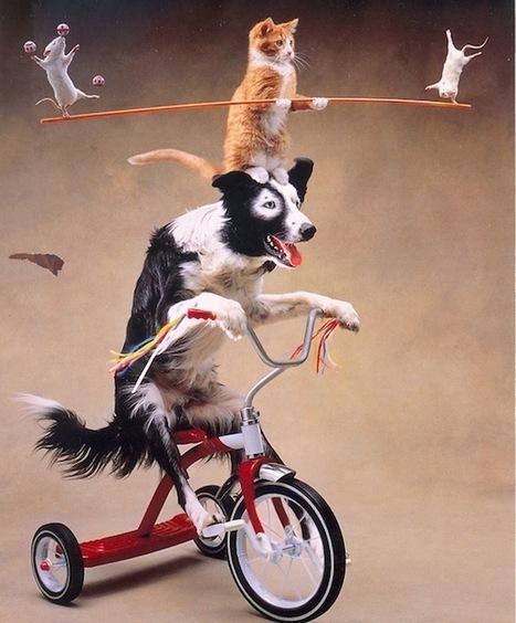 Freelances : les Web designers devraient s'inspirer des chiens | Freelance & start-ups | Scoop.it