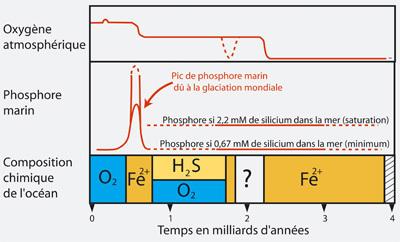 Pour la Science -  Actualité - Le phosphore marin à l'origine des organismes pluricellullaires?   Aux origines   Scoop.it