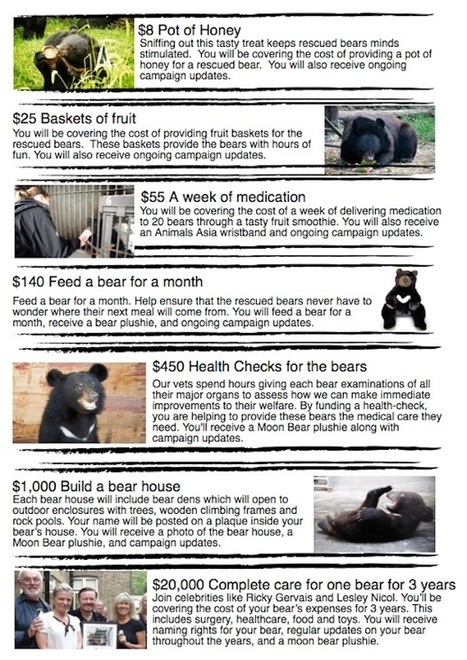 Nanning  Project: The World's Biggest Bear Rescue   Projects We Love   Scoop.it